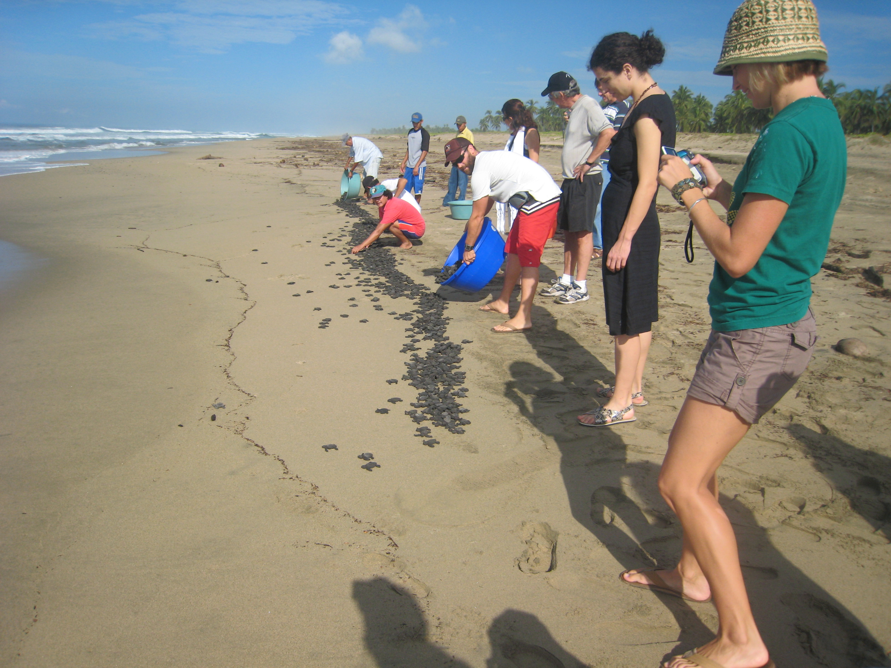 Sadie, Catherine, Tim, Brian, Kirsten and others releasing turtles at Playa Viva