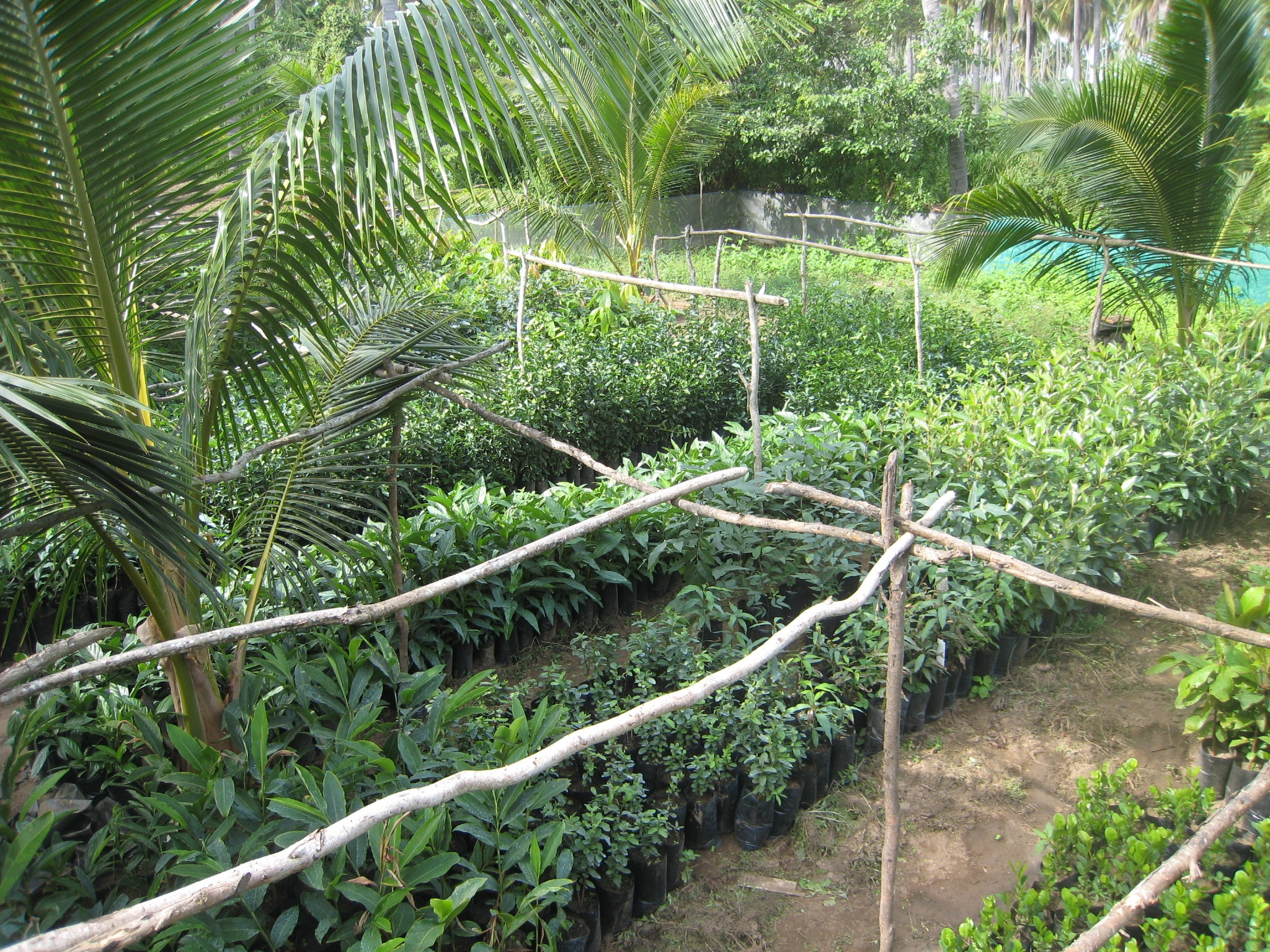 Vivero / Nursery - 7000 Plants and Trees for PlayaViva