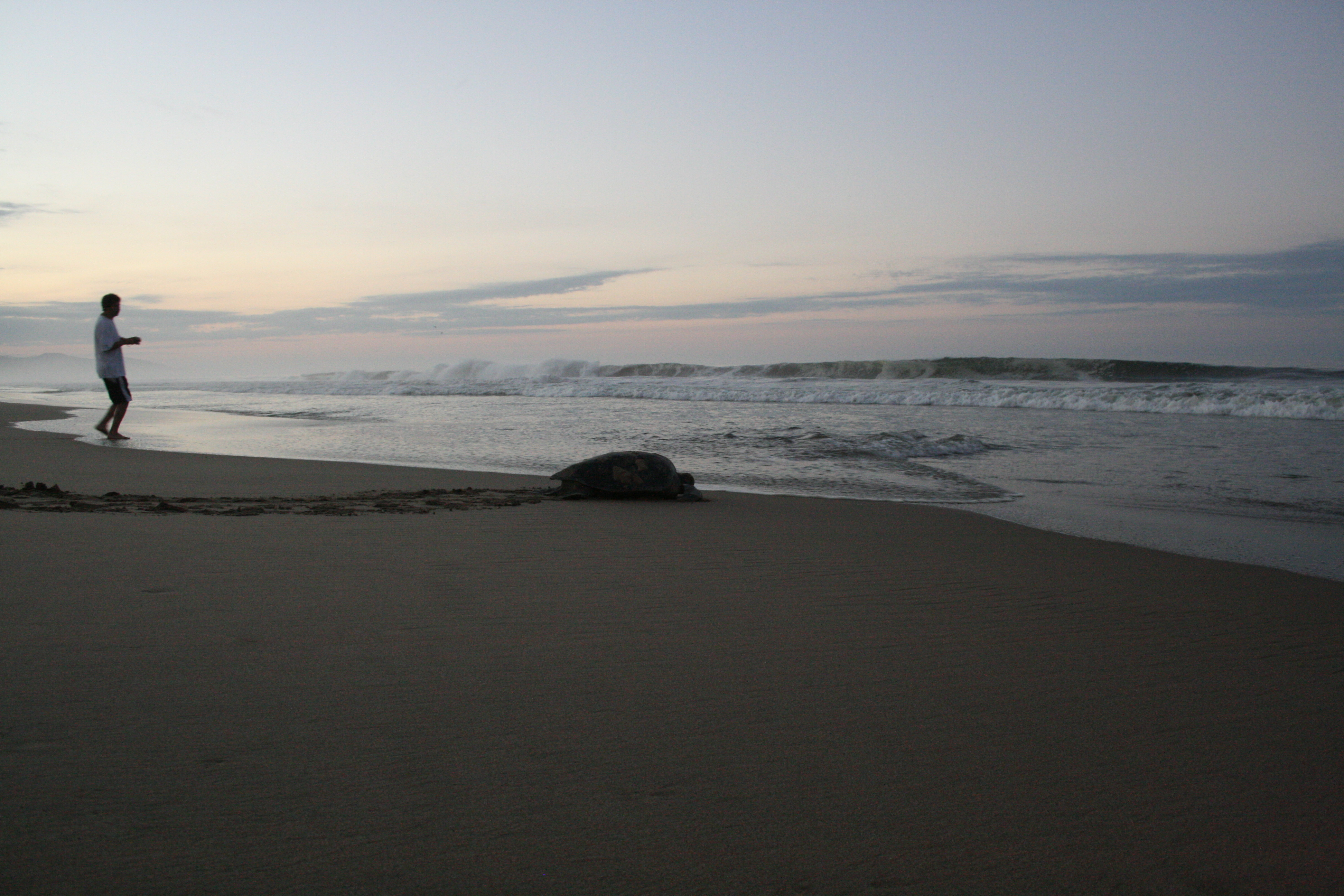 Turtle at Sunrise