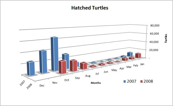 Turtles Released at La Tortuga Felize, Playa Viva, Guerro, Mexico 2007/2008